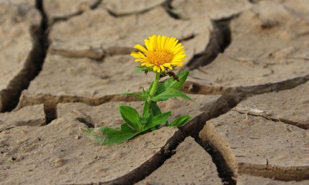 É ela, a resiliência, que nos faz florir mesmo nos períodos mais secos (Foto: Free Images)