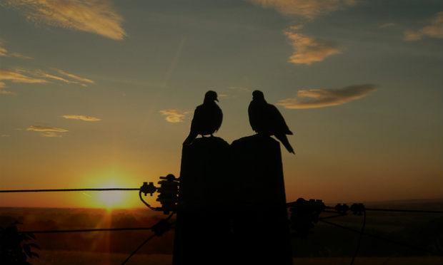 Imagem de pássaros (Foto ilustrativa: Free Images)
