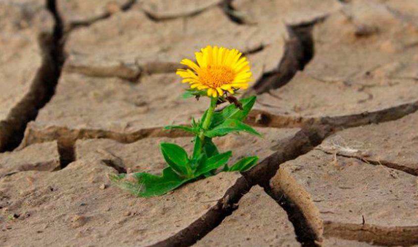 Resiliência, para não desistir de nós
