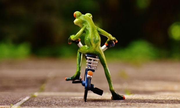 Imagem ilustrativa de sapo em bicicleta de costas (Foto ilustrativa: Pixabay)